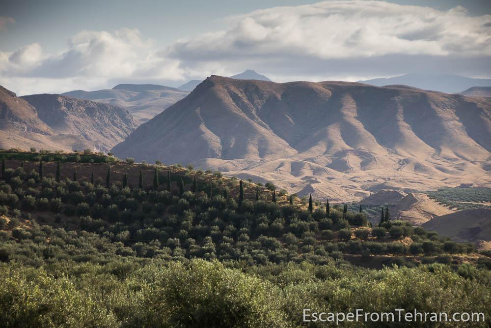 Olive fields near Manjil, Gilan Province, Iran