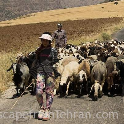 Young female shephard, Near Bisheh, Lorestan, Iran