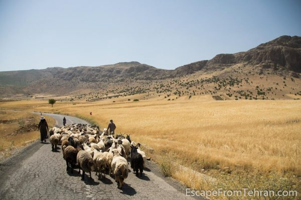 Near Bisheh, Lorestan, Iran