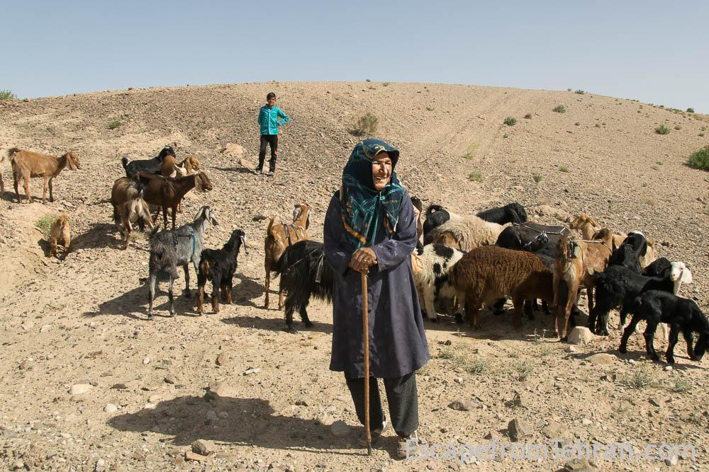Shepherds Of Iran Central Iran Ali Torkzadeh Com (100 Of 13)