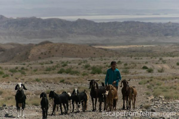 Shepherds Of Iran Central Iran Ali Torkzadeh Com (108 Of 13)