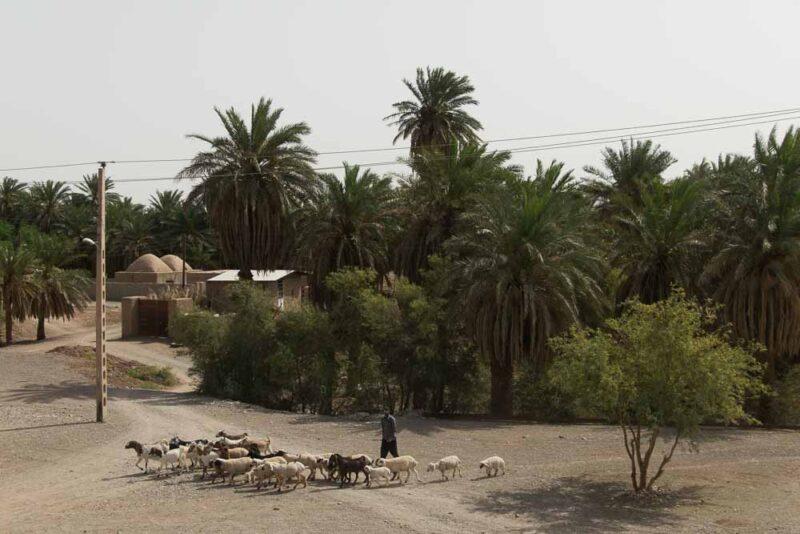 Shafiabad Kerman Province Dashte Lut Iran Ali Torkzadeh Com 11